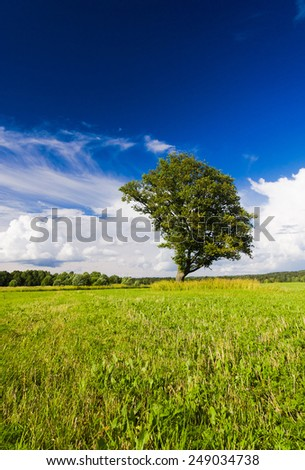 Vibrant Summer Nobody Outside  - stock photo