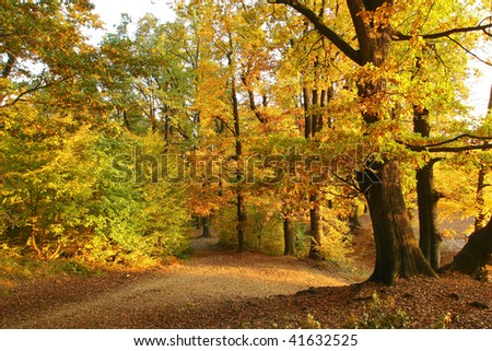 Vibrant warm colors autumn forest scenery.