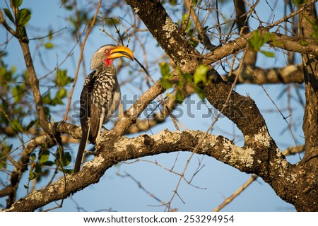Vibrant yellow-billed hornbill in a tree - stock photo