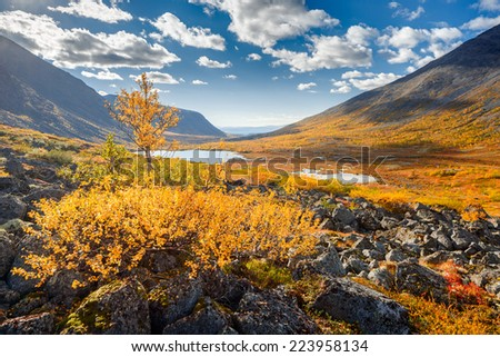 Vibrant-yellow birch tree in front of colorful autumn tundra in Malaya Belaya river valley in Hibiny mountains above the Arctic Circle, Russia - stock photo