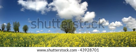 Vibrant yellow flowers stand tall in field. Backdrop is a deep blue sky with trees on the horizon and some fair weather clouds. - stock photo