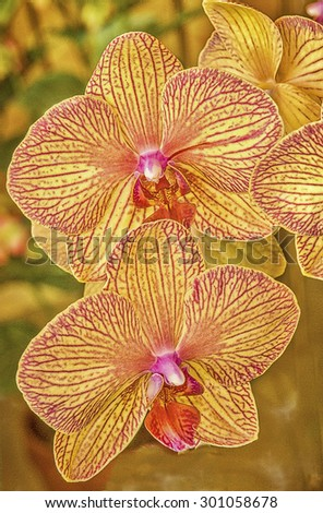 Vibrant yellow red phalaenopsis orchids,digital oil painting - stock photo