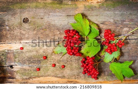 viburnum on vintage wooden boards background autumn concept  - stock photo