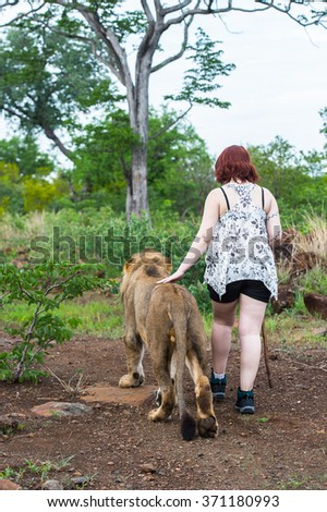 VICTORIA FALLS, ZIMBABWE - JAN 15, 2016: Unidentified girl walks alone with a lion. African lions are endangered and need protection