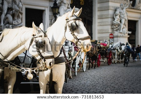 Vienna, Austria, traditional two-horse carriage