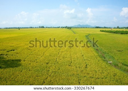 Vietnam countryside landscape with vast rice field, yellow ripe paddy plantation, Mekong Delta is big granary for export, beautiful scene at agriculture farm - stock photo