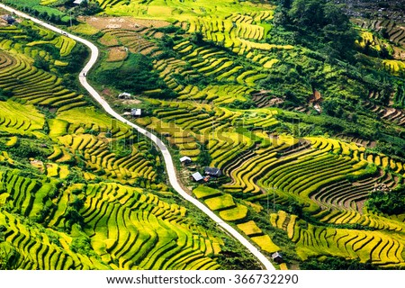 vietnam landscape, Terraced rice fields in Y Ty, LaoCai Province, VietNam. Terraces in northwest Vietnam's natural wonders. it attracts a lot of tourists