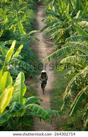 VIETNAM - SEPTEMBER 30, 2014:  A woman wearing a conical hat rides her bike through the banana fields under Long Bien Bridge, Hanoi Vietnam. - stock photo