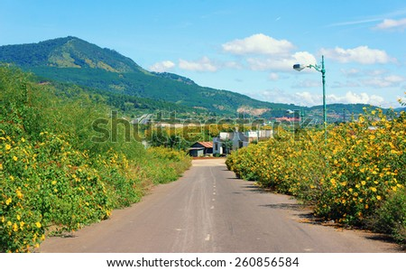Vietnamese countryside with wild sunflower bloom in yellow along street, Dalat is city for travel, with beauty landscape, beauty village, wild flower  - stock photo