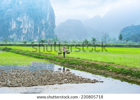 Vietnamese farmer works at rice field at foggy morning. Ninh Binh, Vietnam travel landscapes and destinations. Organic agriculture at southeast asia - stock photo