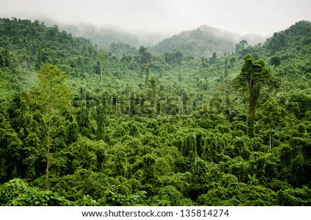 Vietnamese Jungle, Ha Tinh Province, Vietnam. - stock photo