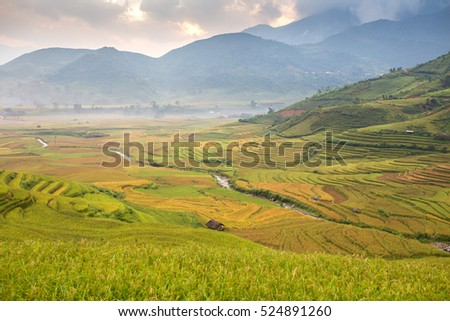 Vietnamese rice terrace field in Tule Yen Bai Vietnam.