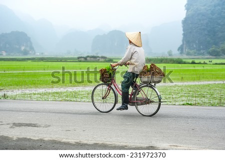 Vietnamese woman at conical hat on bicycle going for work at rice field. Ninh Binh, Vietnam travel landscapes and destinations - stock photo