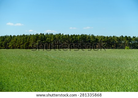 View across a field in summer. - stock photo
