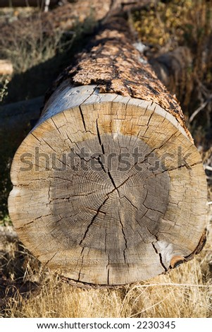 View down a cut log of a partially burned tree - stock photo
