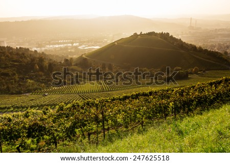 View down a vineyard with the City of Stuttgart in the background - stock photo