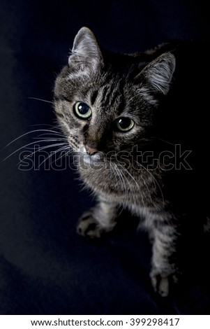 View from above of a grey tabby cat with soulful eyes sitting on the floor in the darkness looking up at the camera