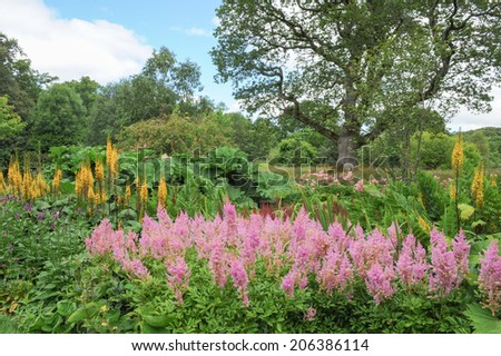 View from formal garden across to a meadow with a n oak tree in a traditional English garden at Rosemoor, Torrington, Devon, England, UK - stock photo