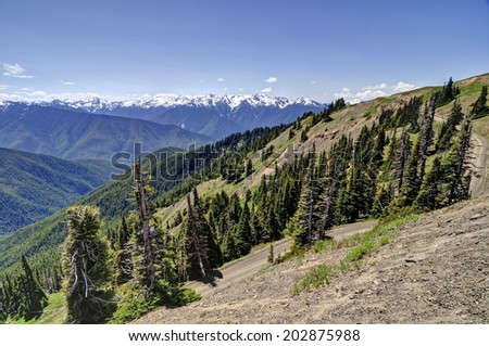 view from Hurricane Ridge, Olympic National Park - stock photo