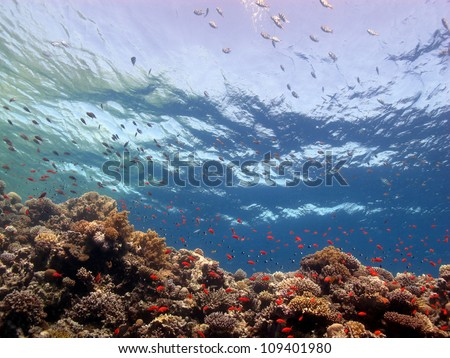View from the corals at Blue hole - Red sea - stock photo