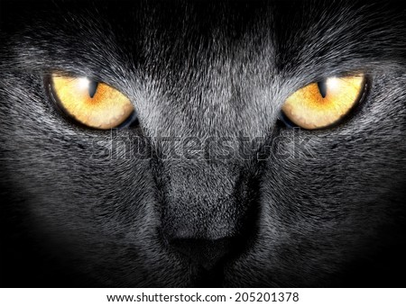 View from the darkness. Muzzle a cat on a black background. - stock photo