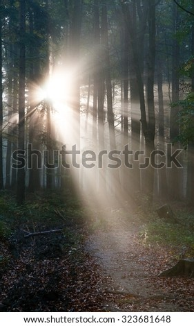 View from wood with contreyour sun rays