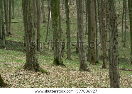 view inside of the forest on the trees