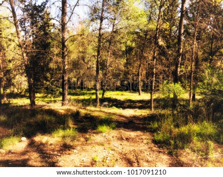 View inside of the forest on the trees. Coniferous forest. Trees grow in the middle of the forest