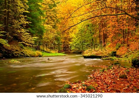 View into autumn mountain river with blurred waves,, fresh green mossy stones and boulders on river bank covered with colorful leaves from maples, beeches or aspens tree.  - stock photo