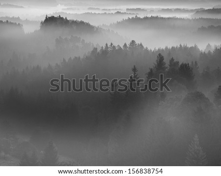 View into deep misty valley in Bohemian national park, Europe. Trees increased from foggy background. Black and white picture.  - stock photo