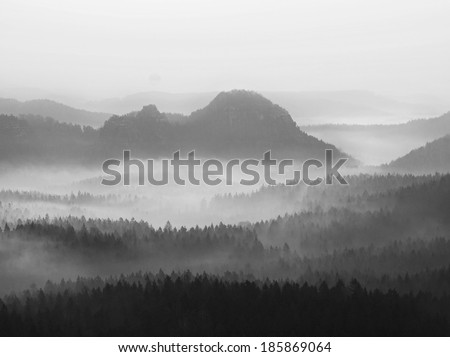 View into deep misty valley in German national park, Europe. Hill above valley, trees increased from fog. Black and white picture.  - stock photo