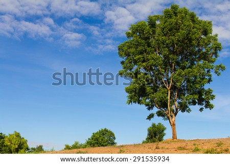 View large lush green trees grow on barren hill looking over the beautiful sky. - stock photo