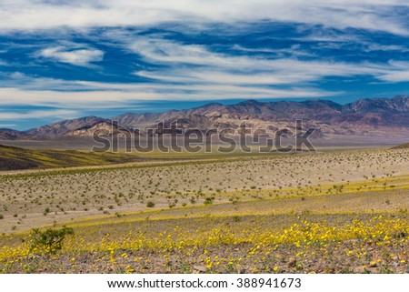View looking south from Ashford Mill in Death Valley National Park during the 2016 Super Bloom wildflower bloom
