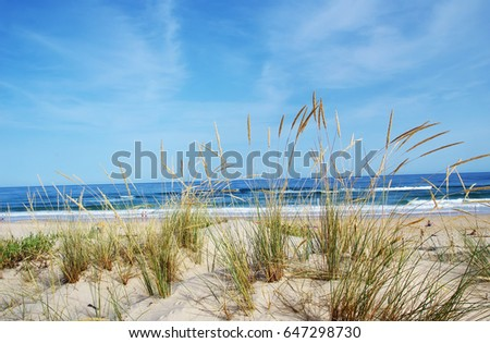 View of a beautiful landscape dune flora in Algarve, Portugal