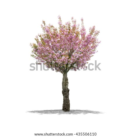 View of a Cherry Tree in high definition isolated on a white background