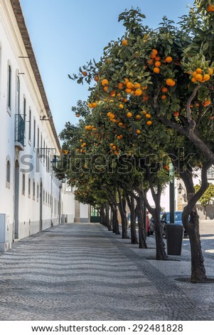 View of a cobblestone street with orange trees on the historical area of Faro, Portugal. - stock photo