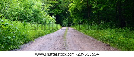 View of a dirt road in the mixed forest(beech,oak,ash), warm evening light, spring, stitched, by Beckingen - Saarland / Germany - stock photo