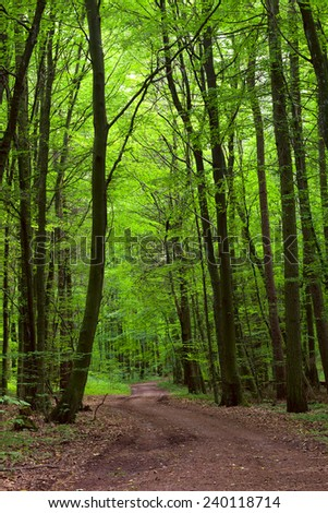 View of a dirt road in the mixed forest(beech,oak,ash), warm evening light, summer, by Beckingen - Saarland/Germany - stock photo