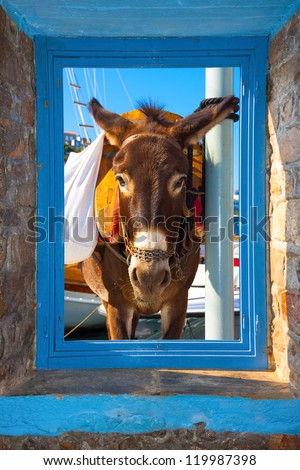 View of a donkey threw a window frame  in Santorini island Greece - stock photo