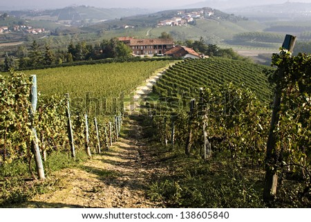 View of a farm in the vineyards in the Langhe in Piedmont