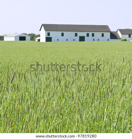 View of a farm with a field of wheat. - stock photo