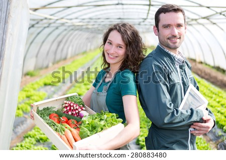 View of a Farmer team at work in a greenhouse - stock photo