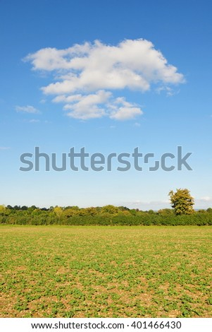 View of a Field of Farmland Crops and a Beautiful Blue Sky Above - stock photo
