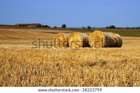 View of a field of wheat with balls