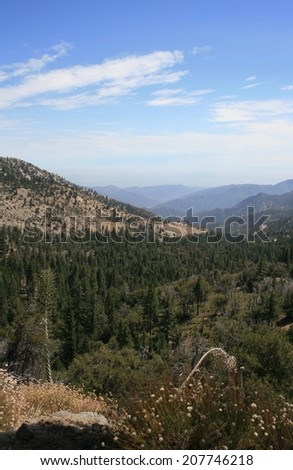 View of a forest from a mountain, California - stock photo