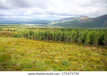View of a loch and pine forest in Cairngorms National Park, Scotland. UK.