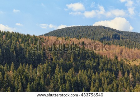 View of a of forested mountain in Harz Germany