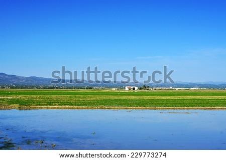 view of a paddy field in Delta del Ebro, in Catalonia, Spain - stock photo