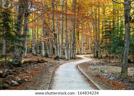 View of a pathway to the forest in autumn