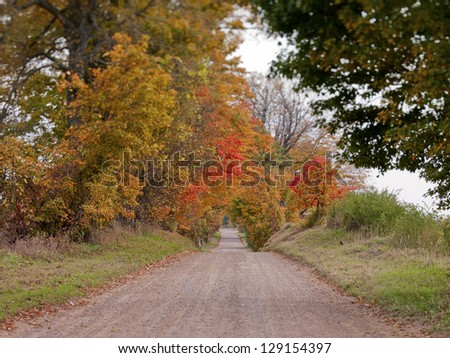 View of a road during fall with trees on the side.